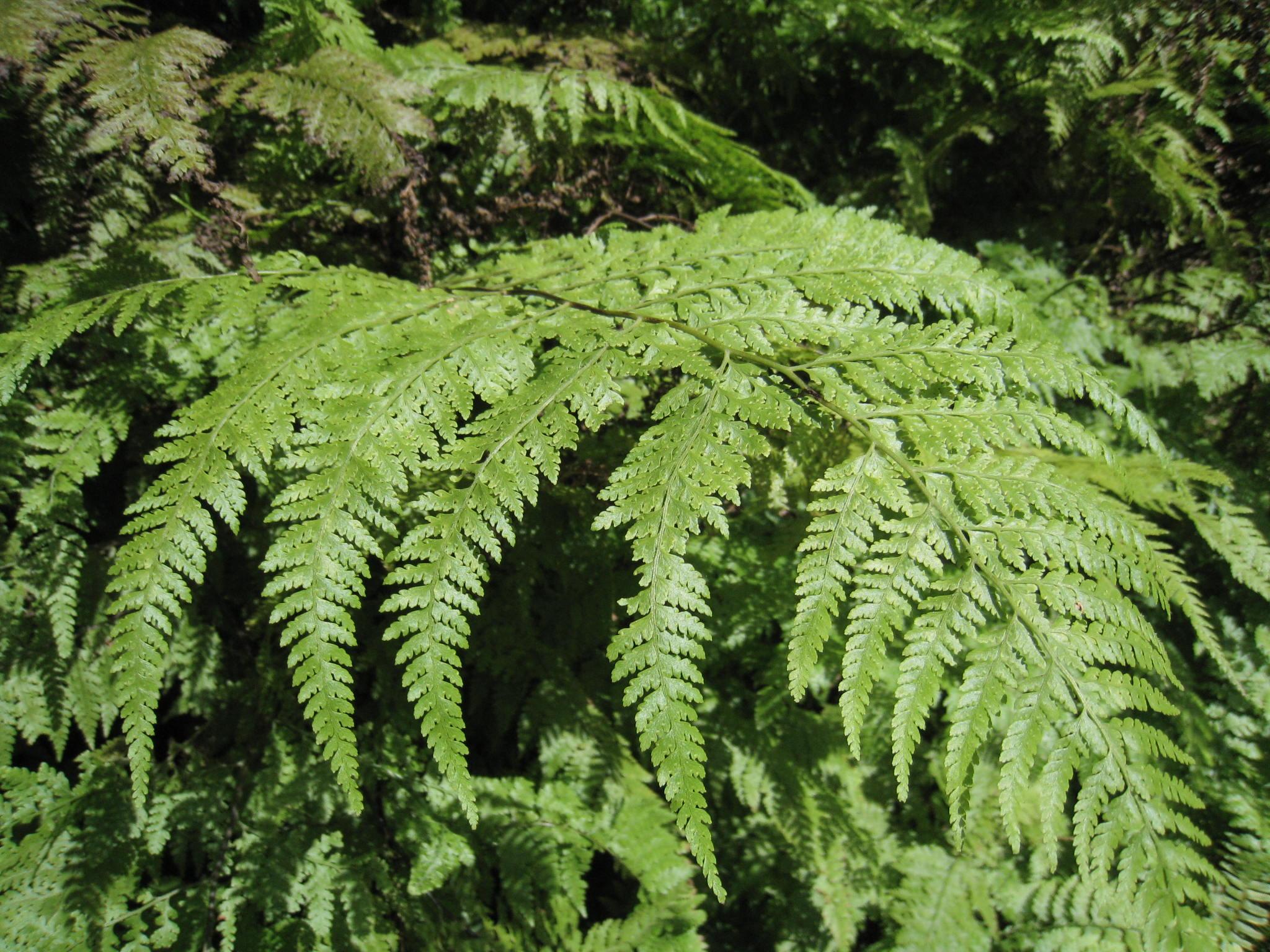 Common Hiking Plants Native Plants Of Hawaii